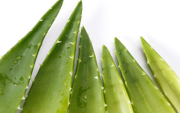 3 produkty aloesowe, które pozwolą Ci cieszyć się zdrowymi włosami
